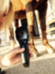 Equine Thermografie
