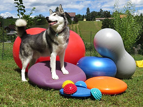 Hundphysiotherapie, Ballanceball, Bandscheibe, Knieop, Ballancetraining