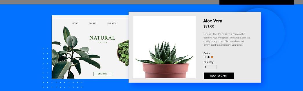 Online bitki mağazası, Aloe Vera
