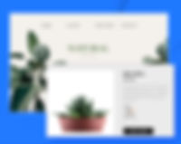 Online Store for Plants, Aloe Vera