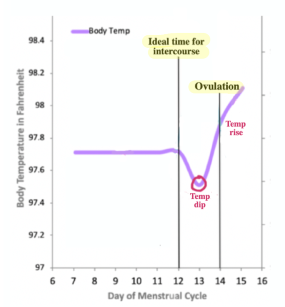 Graph of body temperature over day of the menstrual cycle showing the rare dip prior to ovulation and the temperature rise after ovulation.
