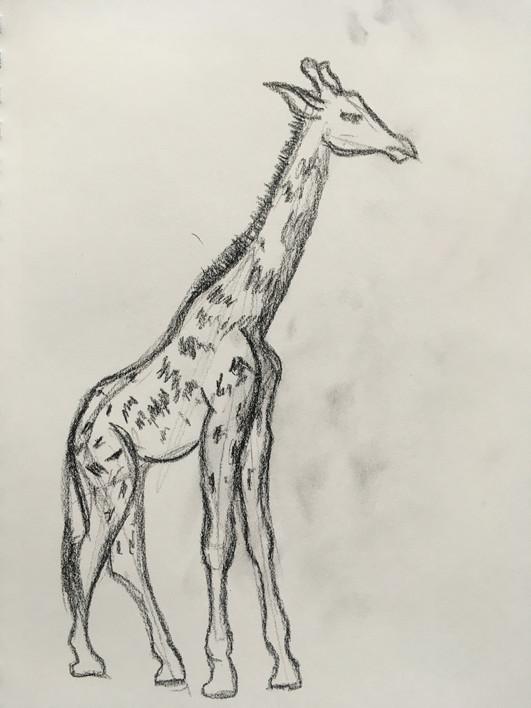 LifeDrawing_Giraffe