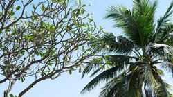 trees Bann Pae Cabana