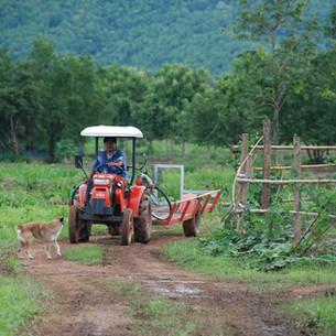 Om the way to the farm.JPG