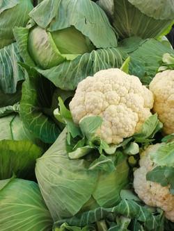 Locally grown cauliflower