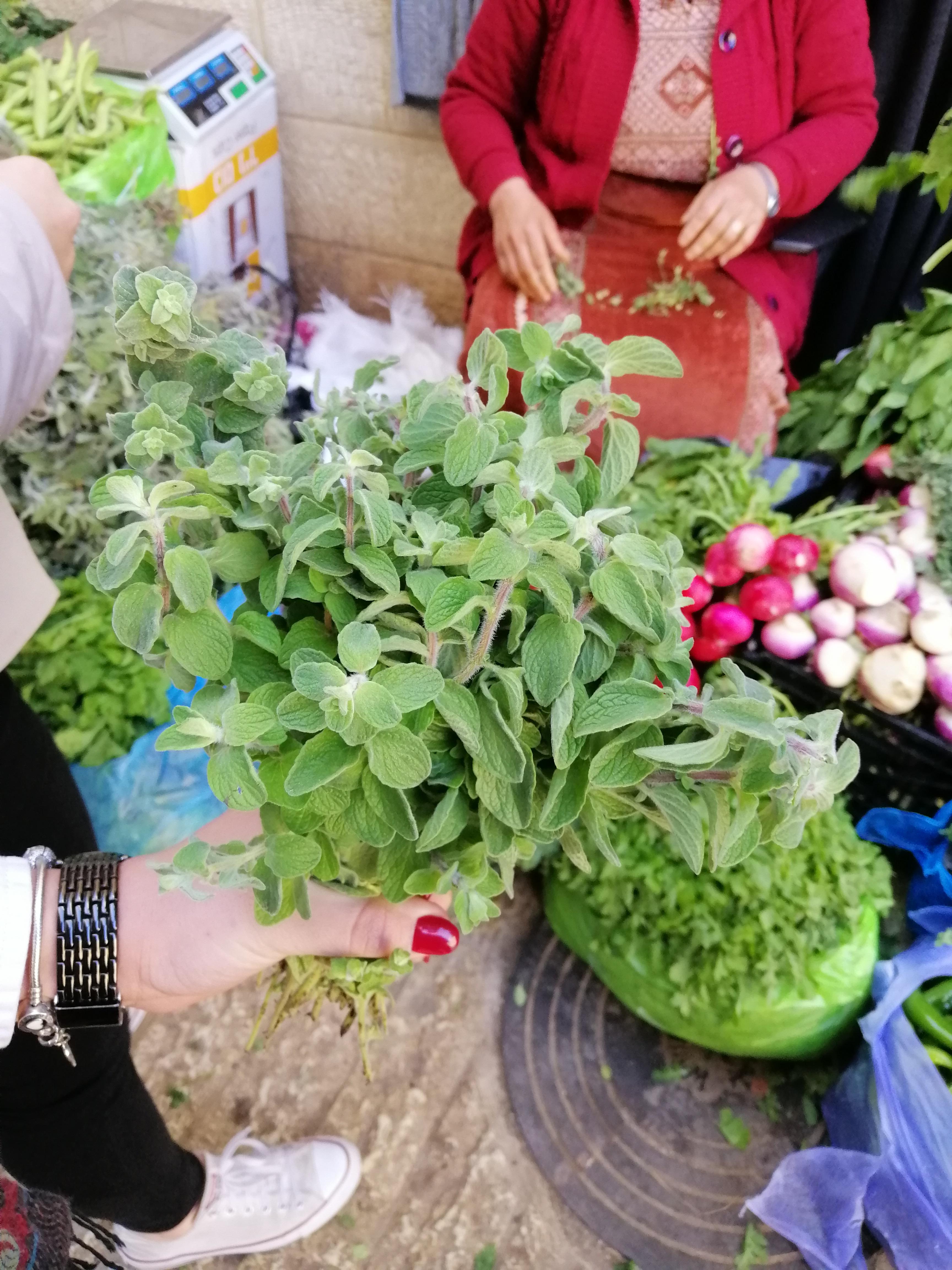 Locally grown za'atar