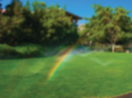 raindow grass v2.jpg
