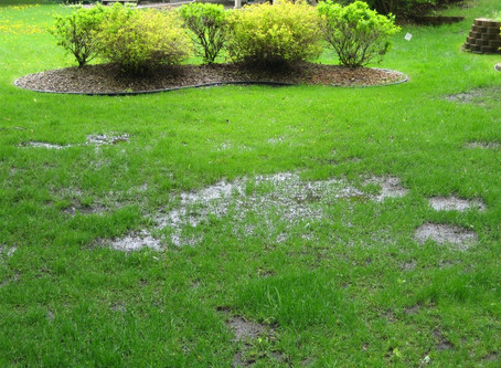 CLOGGED DRAIN FIELDS - THE HOMEOWNERS' DILEMMA
