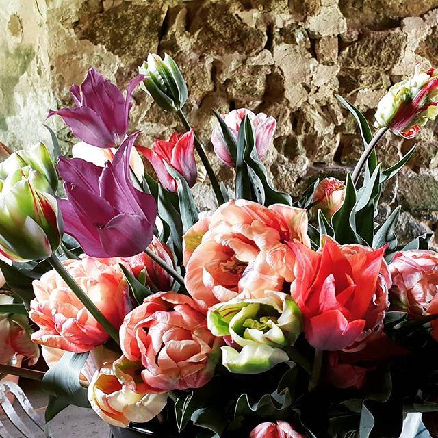 Seconde vague de variétées de Tulipes fr