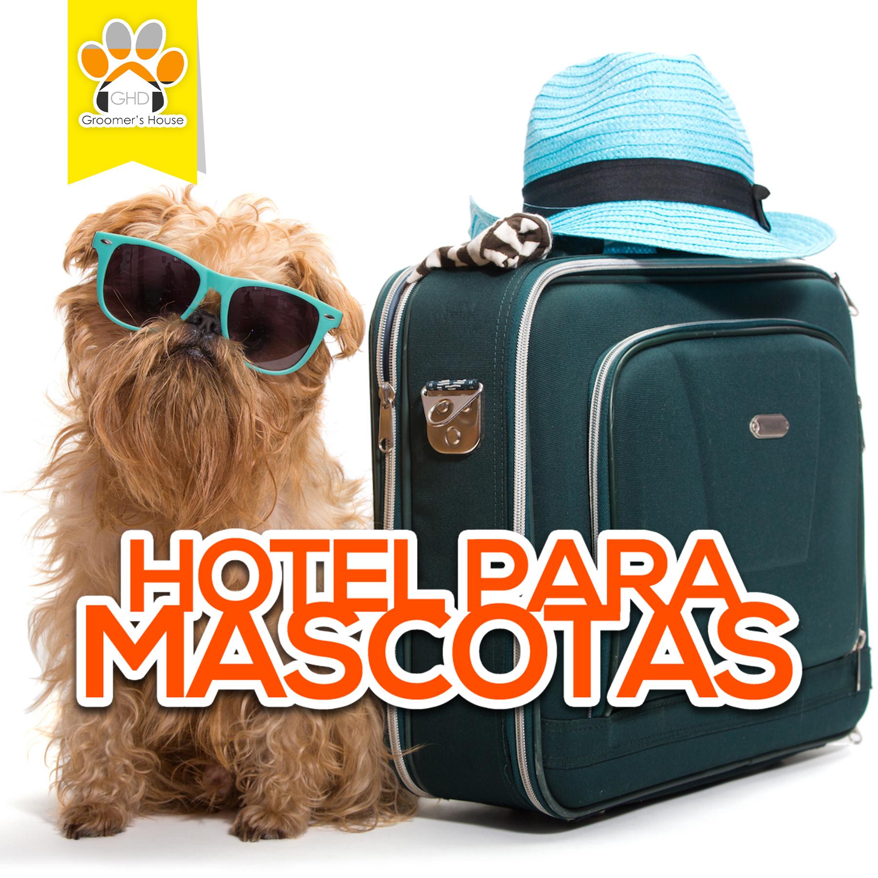 hotel mascotas 2