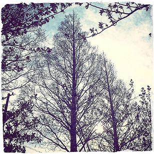 treeswp_edited.jpg