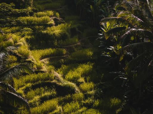 Bali... a slice of paradise