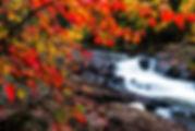 algonquin-photo-tour.jpg