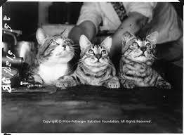 Cute Kitties Prove, We Need To Change