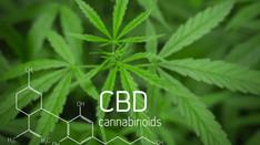 CBD: Is it the Magic Pill?