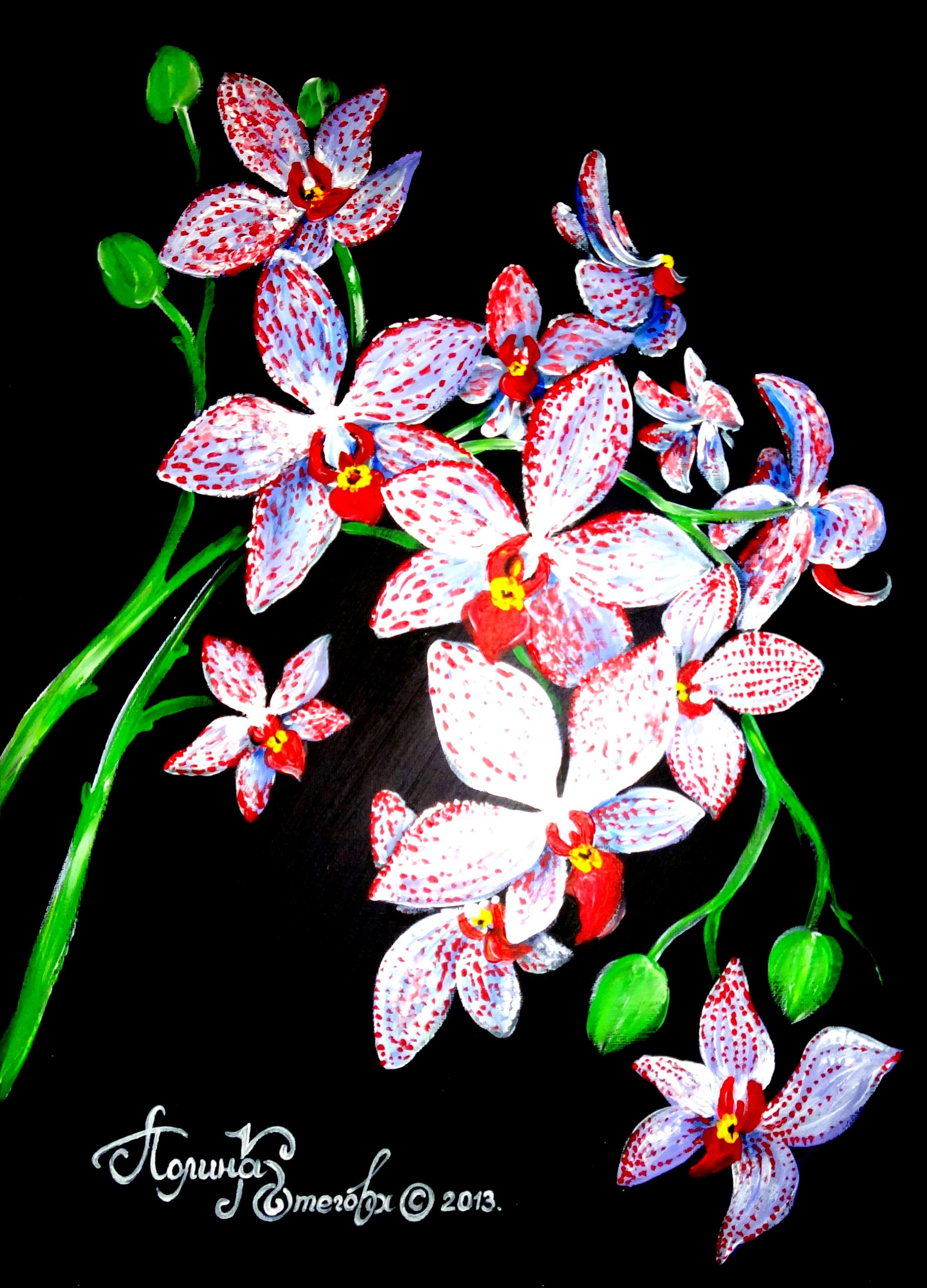 Орхидея (350х500, холст на картоне, акрил)