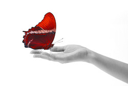 Butterfly on hand, red