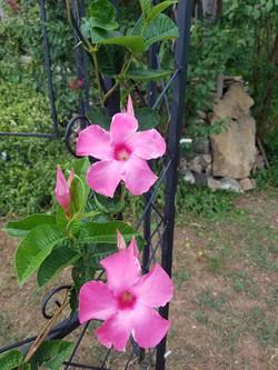 Gazebo with Flowers