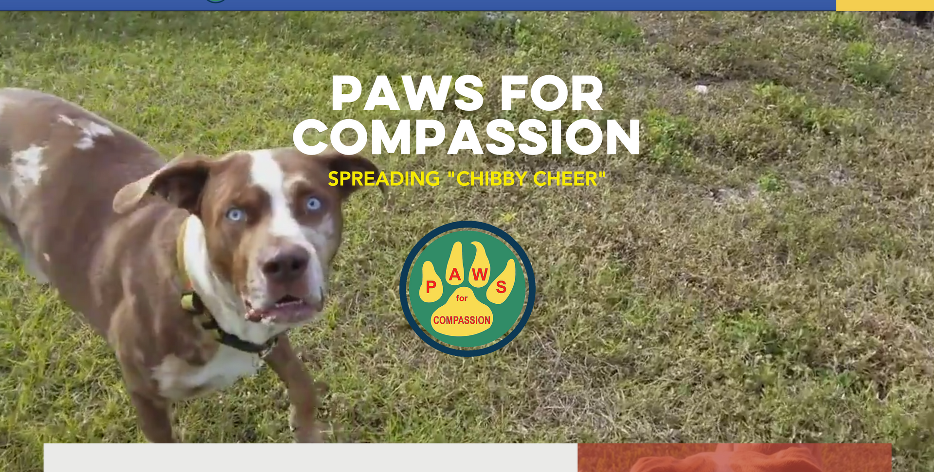 Paws For Compassion