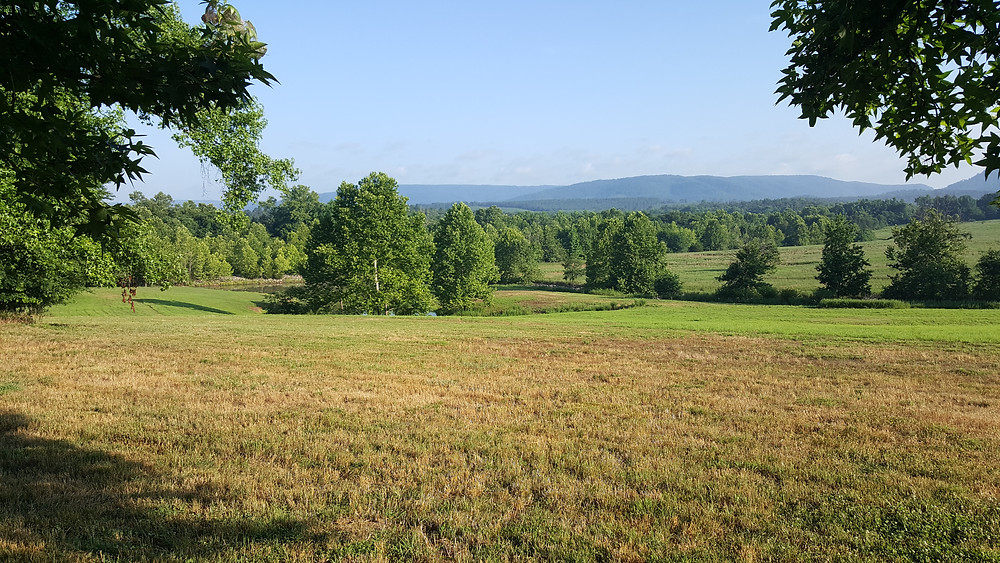 The view from the ceremony site beside the barn in the summer.
