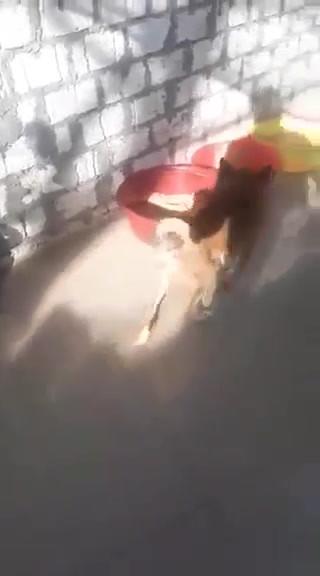 video-1588711740.mp4