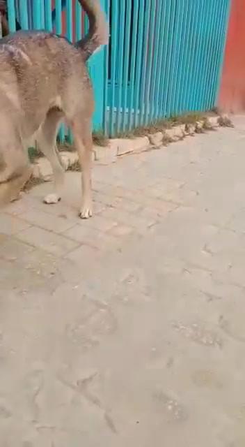 video-1610894858.mp4
