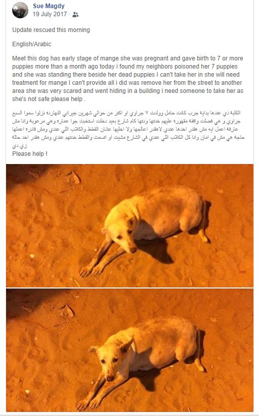 Kiri's facebook appeal