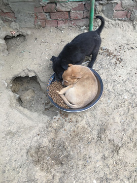 Puppies at the old shelter