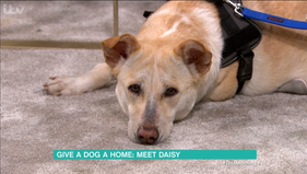 Daisy on This Morning!