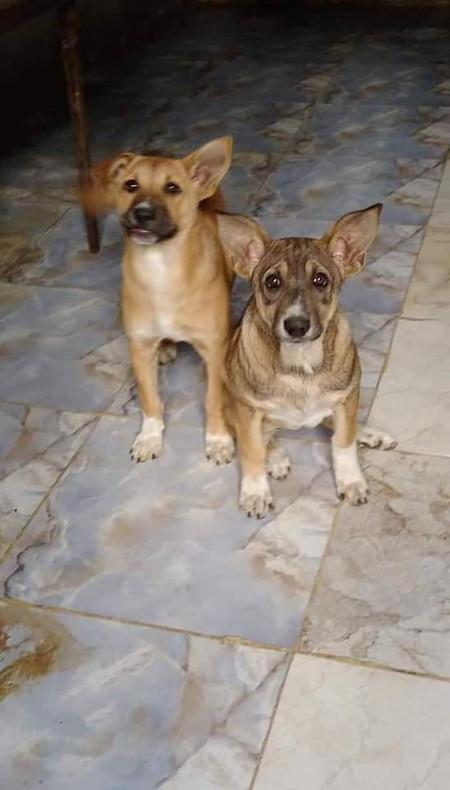 belle and lulu pups.jpg