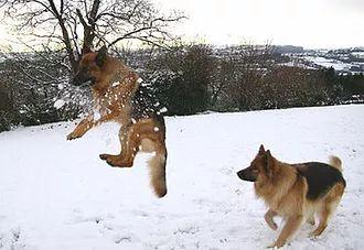 I cani e il freddo