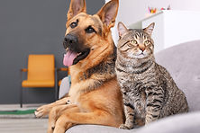 dog-cat-web.jpg