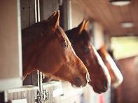 horses in barn.jpg