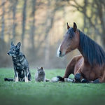 Friendship between different animals. A