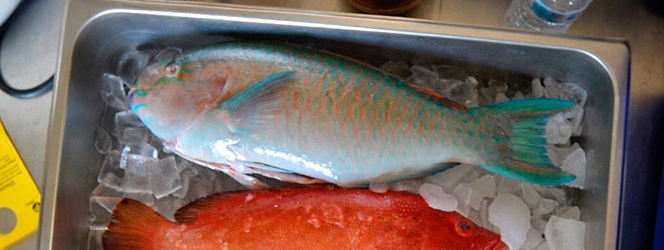 Strawberry Grouper  / Parrot Fish