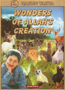 Wonders of Allah's Creation