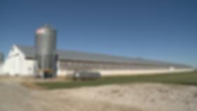 brasil chicken farm