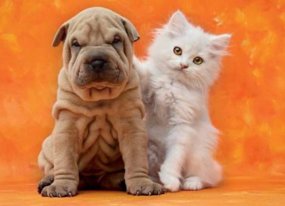 Pet Sitting Per Visit