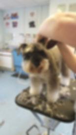 pet services pet sitting