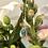 Thumbnail: Aquamarine Drop Necklace