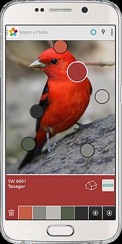 phone-bird.png