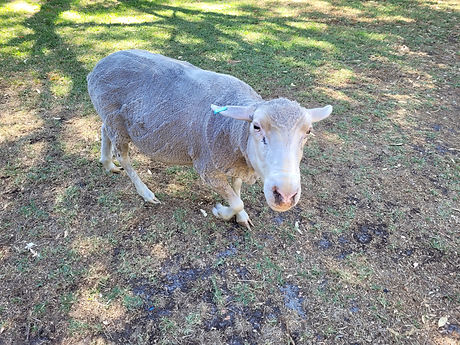 Donna Kebab on back lawn.jpg