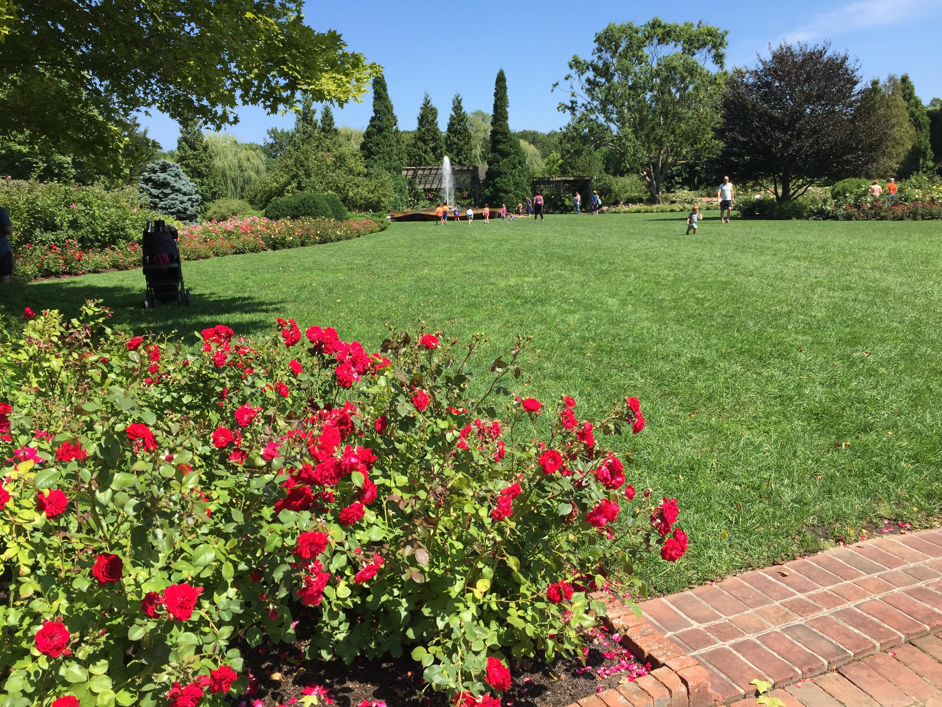 Botanical garden (3)