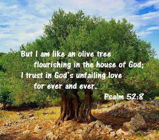 Seeking Shalom