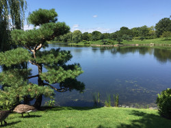 Botanical garden (1)