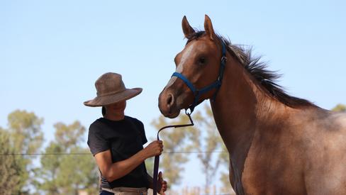 caballo pintado en argentina