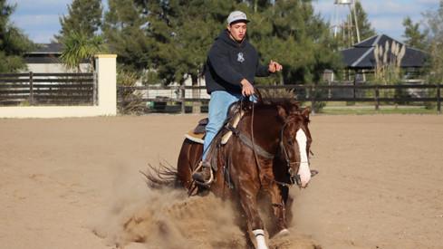 caballo de rienda en venta