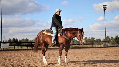 reining gelding for sale