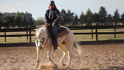 palomino gelding for sale