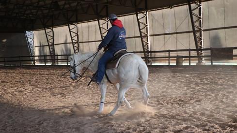 caballo cuarto de milla de rienda en venta